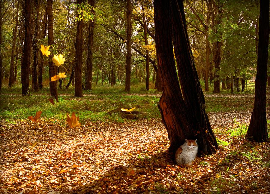 """фото """"Маленький осенний Будда"""" метки: пейзаж, осень"""