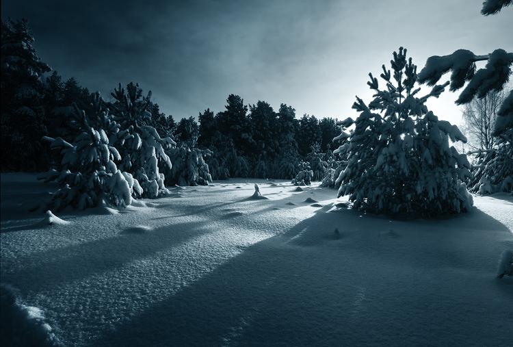 """фото """"Рождественский полдень"""" метки: пейзаж, зима, лес"""
