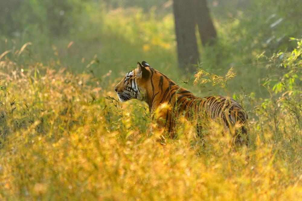 """фото """"Свободный"""" метки: природа, дикие животные"""
