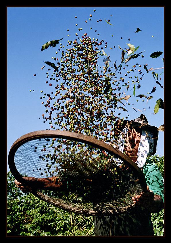 "фото ""Brazilian Coffee #3"" метки: репортаж,"