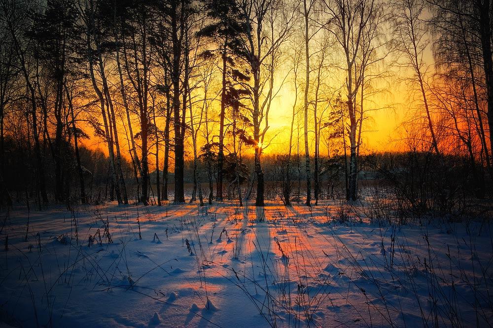 """фото """"Зима"""" метки: пейзаж, лес"""