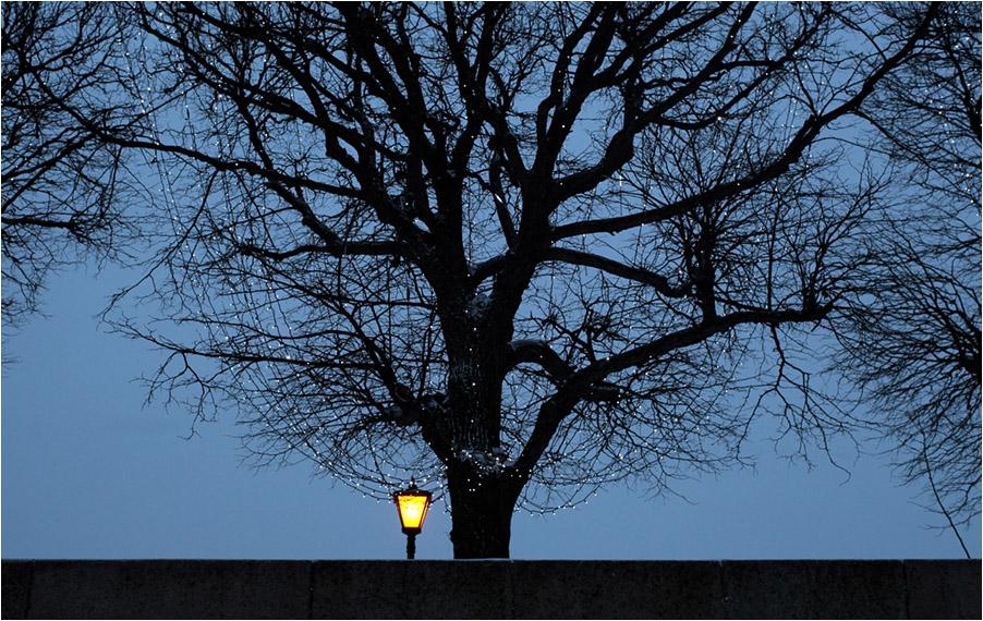 "фото ""Фонарь и дерево"" метки: город,"
