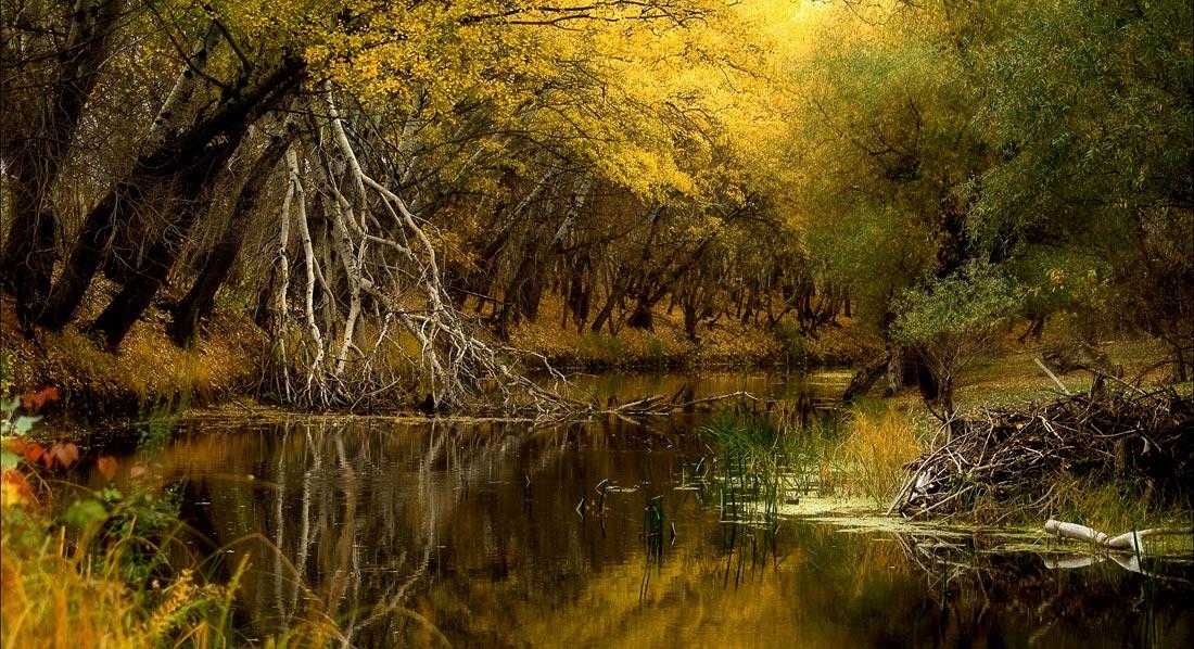 """фото """"Zagyva river"""" метки: пейзаж,"""