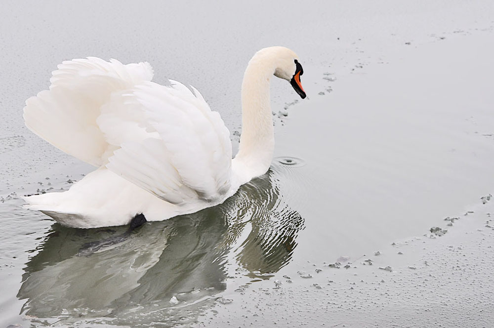 """фото """"Stop following me"""" метки: природа, пейзаж, дикие животные, зима"""