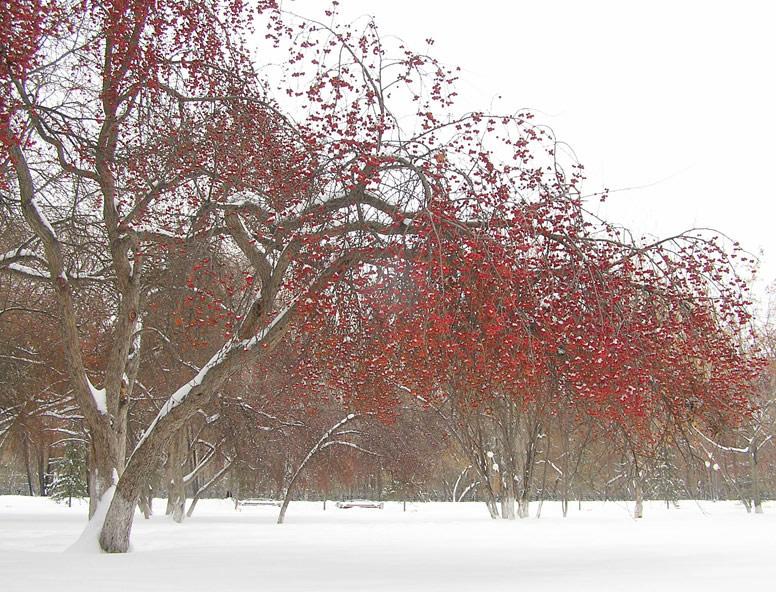 """фото """"Зима красна"""" метки: пейзаж, зима"""