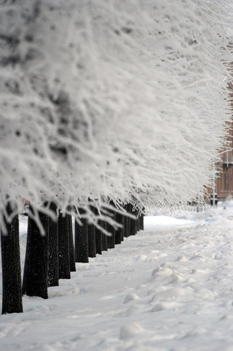 "фото ""хлопок/cotton"" метки: город, пейзаж, зима"
