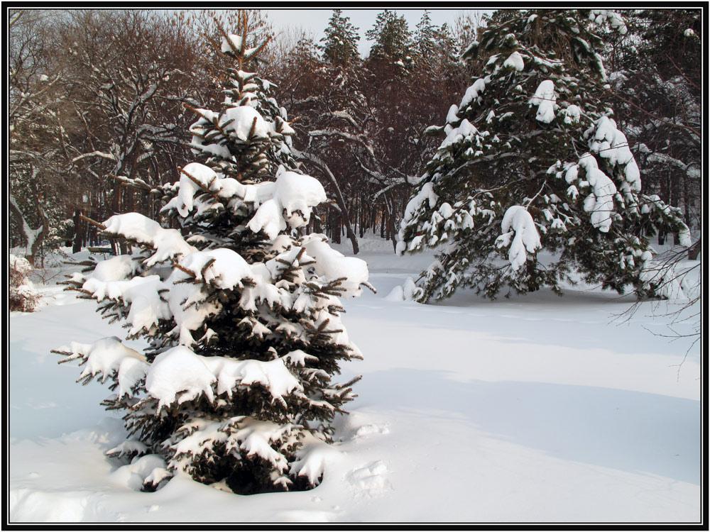 """фото """"Зимняя сказка."""" метки: пейзаж, зима"""