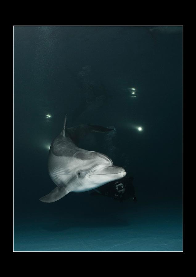 """фото """"В дельфинарии"""" метки: подводные,"""