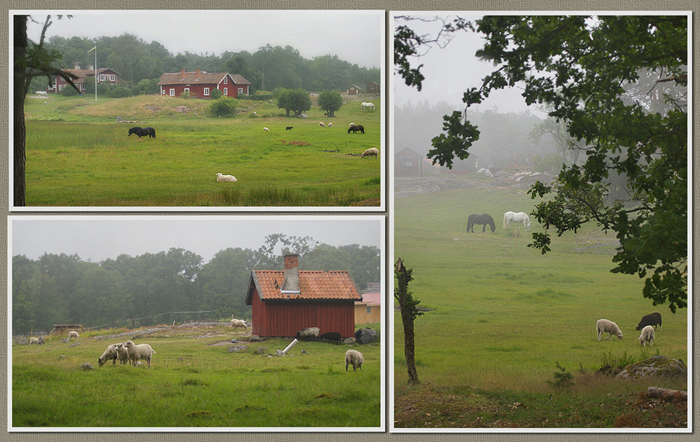 "photo ""***"" tags: travel, nature, Europe, pets/farm animals"