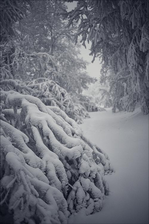 """фото """"* * *"""" метки: пейзаж, зима"""