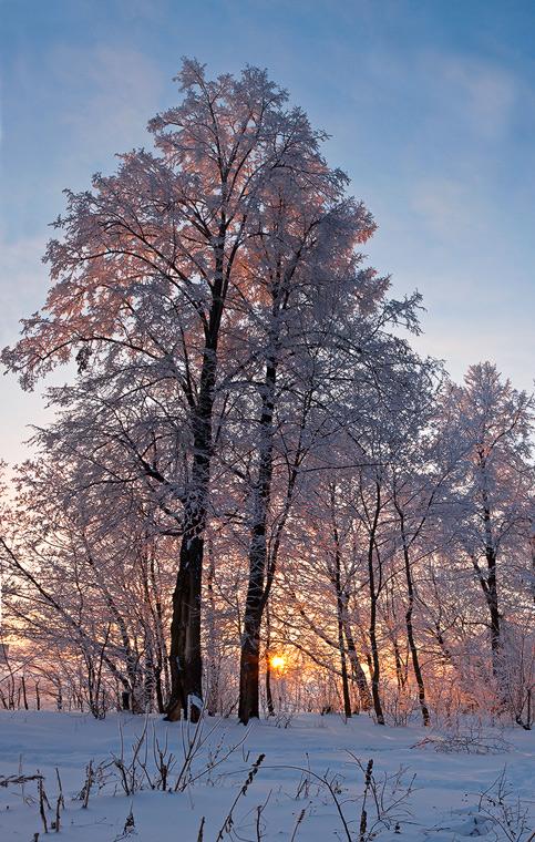 "фото ""Зимние кружева..."" метки: пейзаж, зима"
