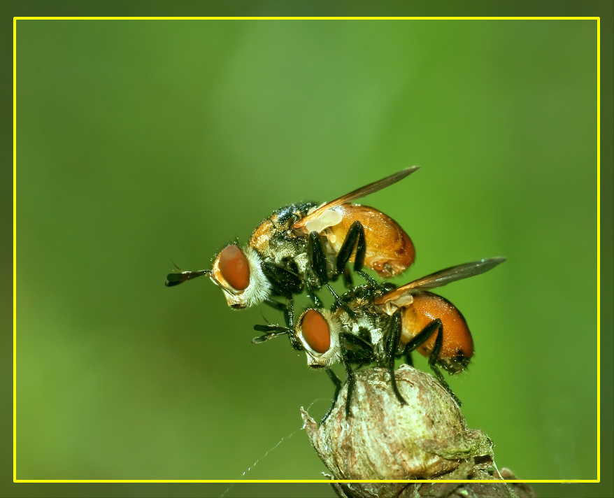 """фото """"Теперь твоя очередь... полетели!"""" метки: макро и крупный план, природа, насекомое"""