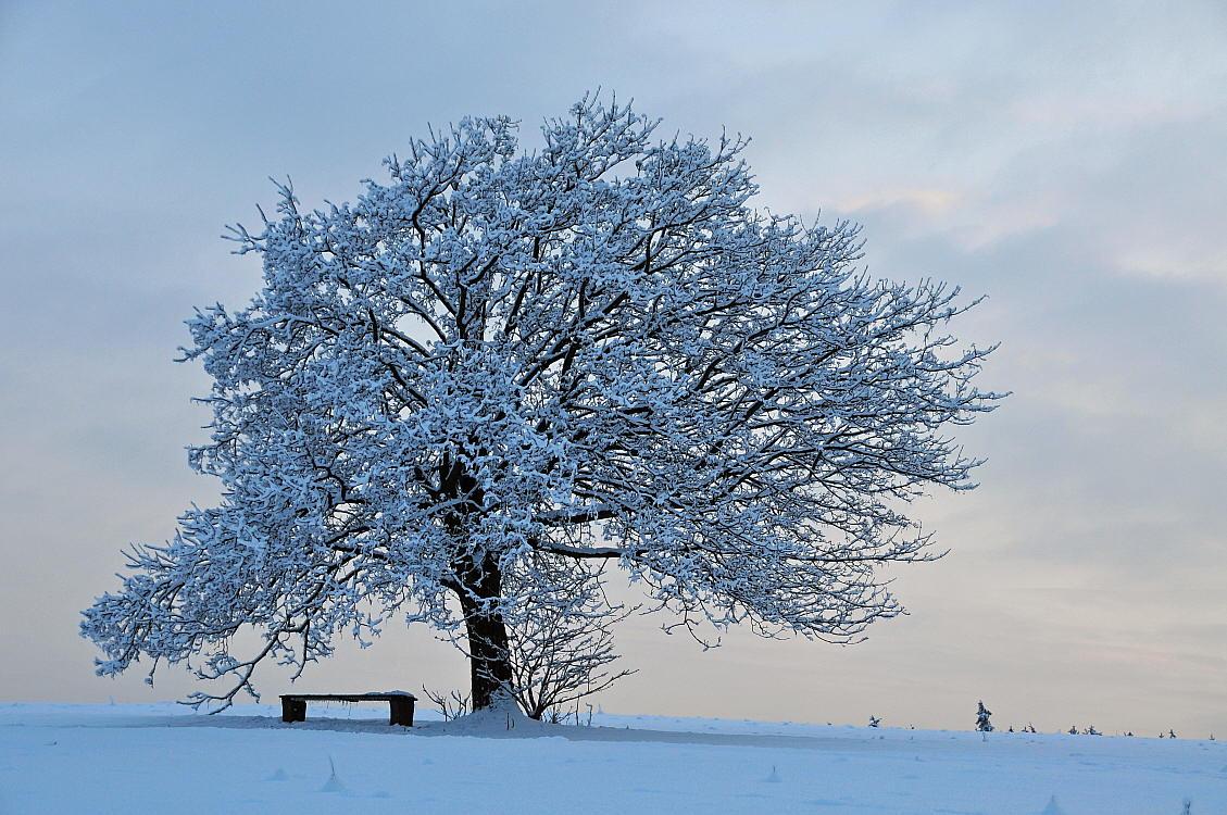 """фото """"tree"""" метки: пейзаж, зима"""