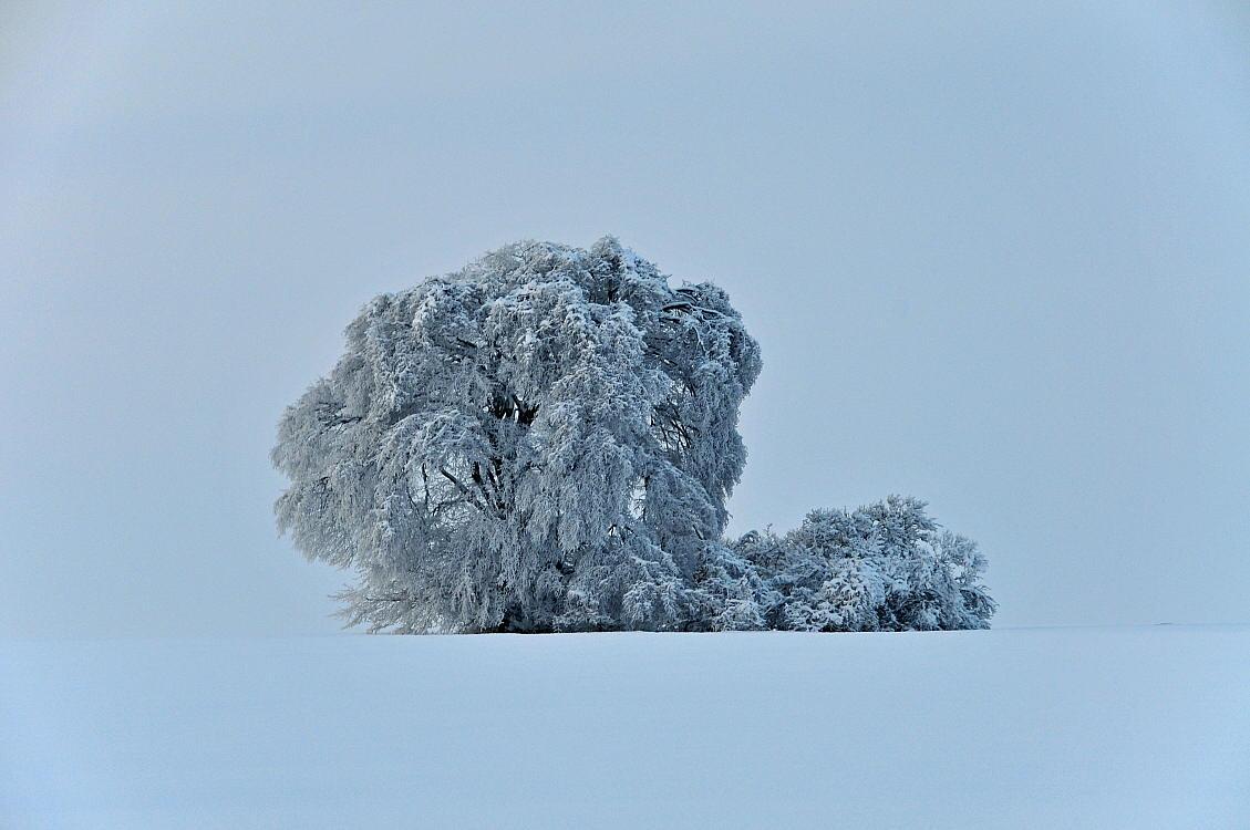 "фото ""another tree"" метки: пейзаж, зима"
