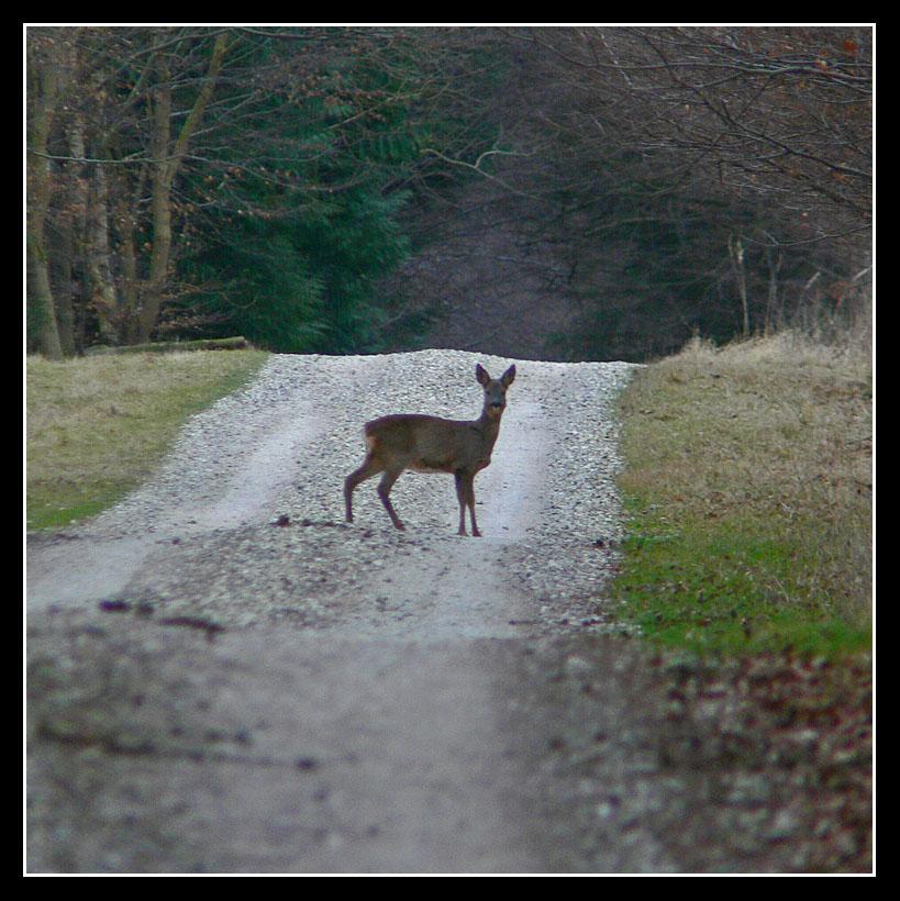 "фото ""Spotted !"" метки: природа, дикие животные"