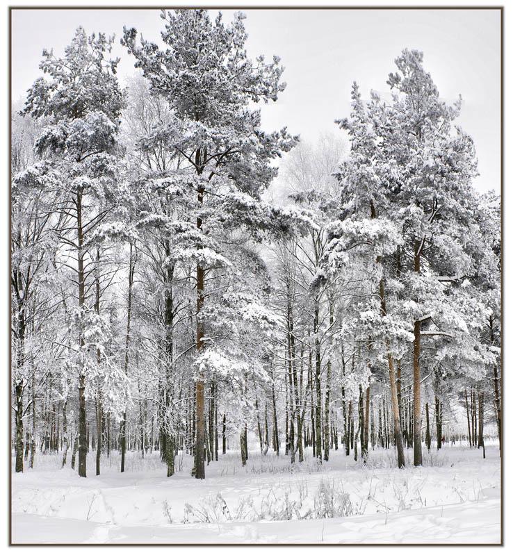 """фото """"Зима купается в снегу..."""" метки: пейзаж, зима"""