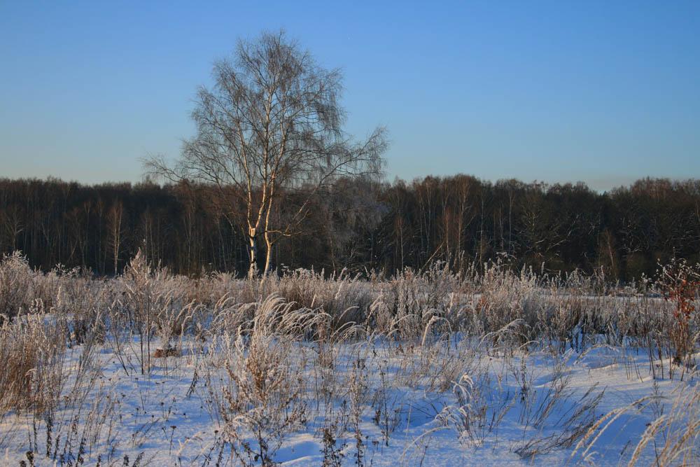 """фото """"Повелительница снежной травы"""" метки: пейзаж, разное, зима"""