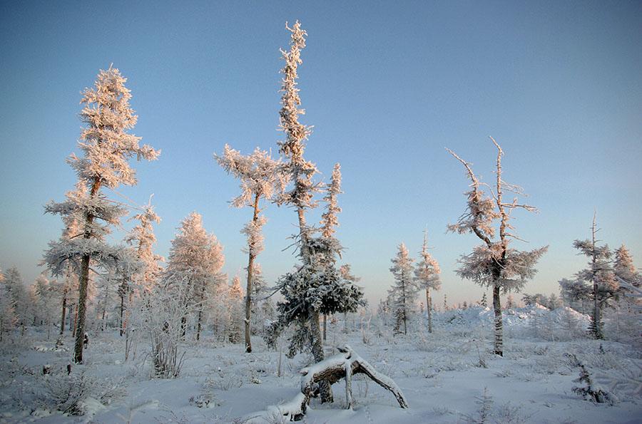 """фото """"Январь Приполярья"""" метки: пейзаж, зима, лес"""