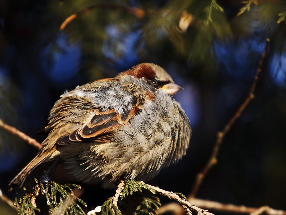 """фото """"-25С"""" метки: природа, дикие животные"""