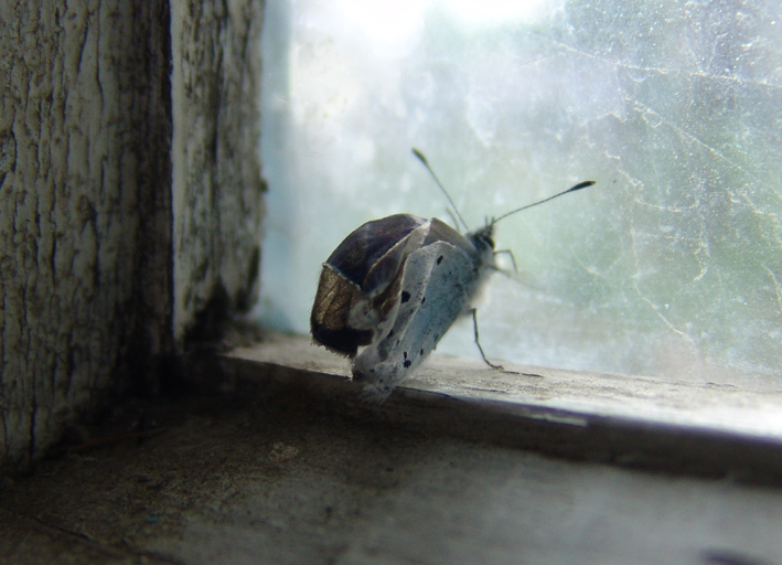 "photo ""***"" tags: nature, genre, insect"