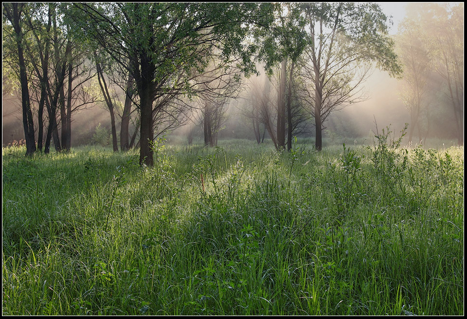 "photo ""early summer morning"" tags: landscape, forest, summer"