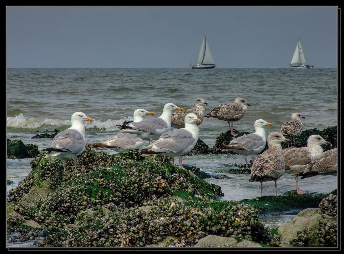 """фото """"***"""" метки: пейзаж, природа, вода, дикие животные"""