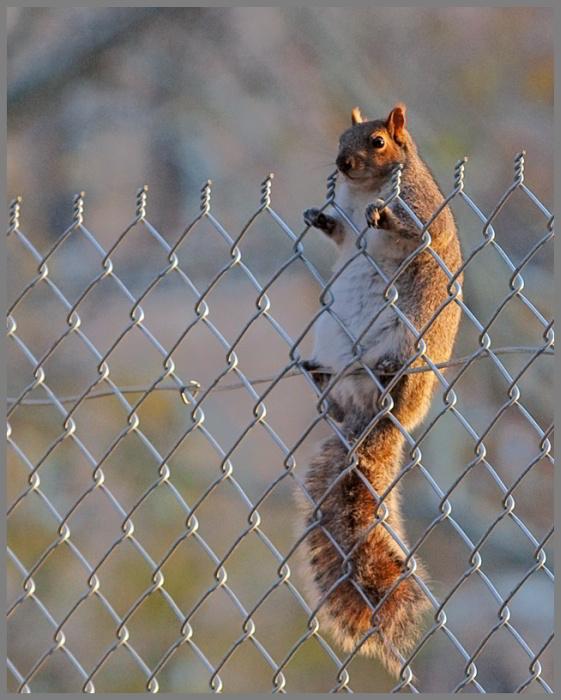 """фото """"Балкон, ряд первый, место 28"""" метки: природа, дикие животные"""
