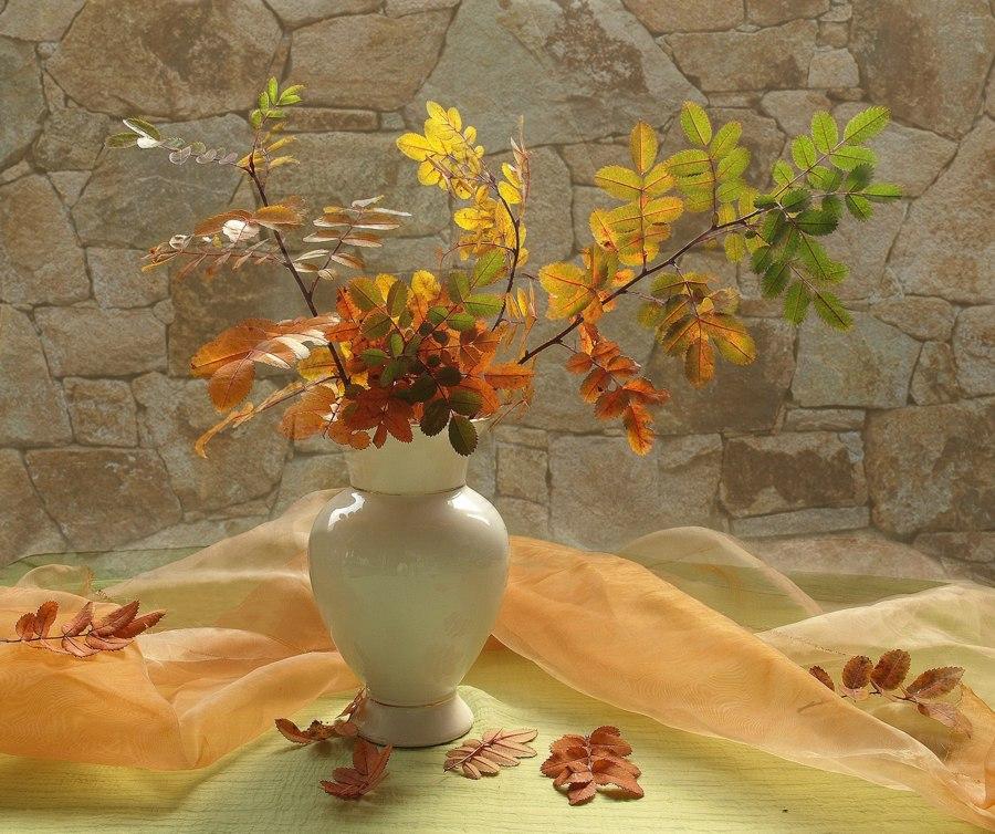 "фото ""Вспоминая осень."" метки: натюрморт,"