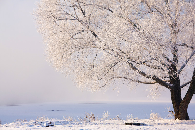 "photo ""Winter in Moscow"" tags: landscape, winter"