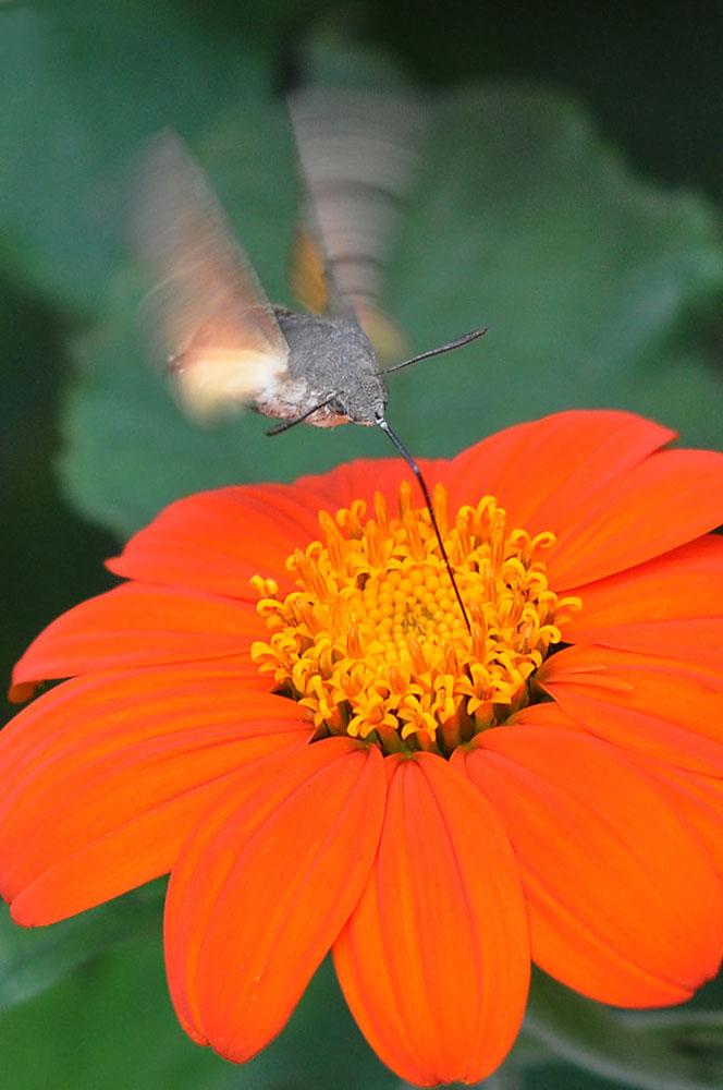 """фото """"Joie de Vivre"""" метки: природа, насекомое, цветы"""