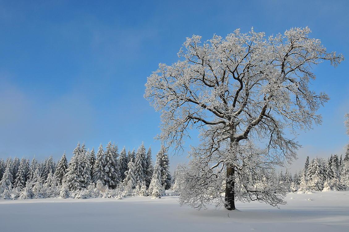 "photo ""Мороз и солнце"" tags: landscape, winter"