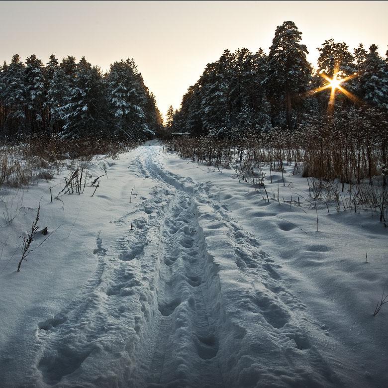 """фото """"Спрятать звезду.."""" метки: пейзаж, лес"""