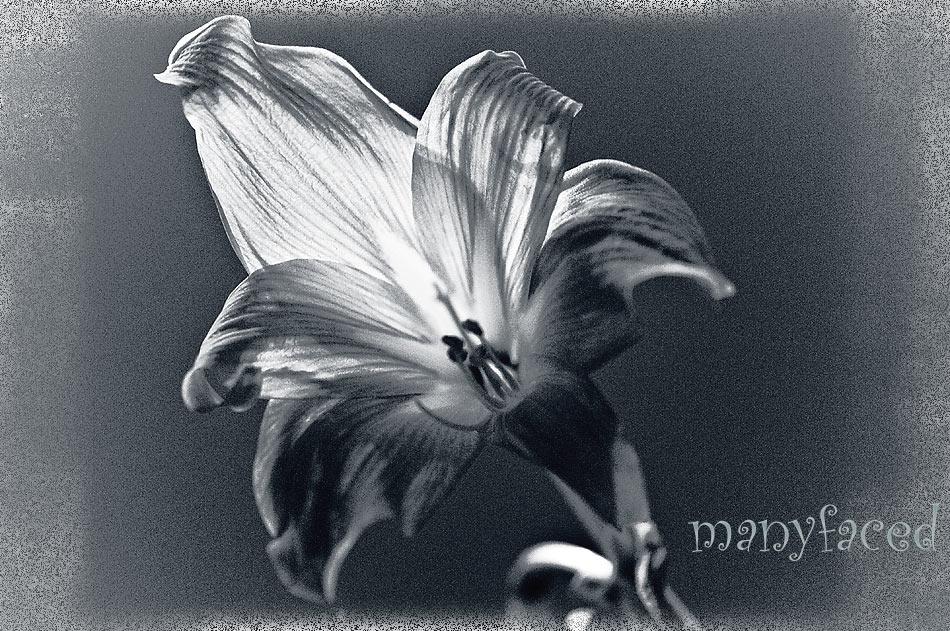 """фото """"Для тебя"""" метки: природа, цветы"""