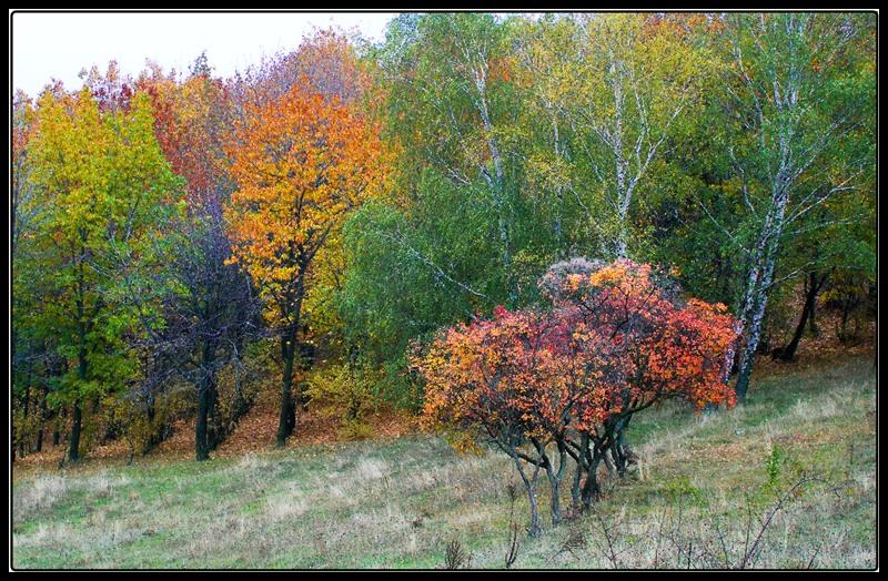 "photo ""Simphony Of Colours"" tags: landscape, autumn, forest"