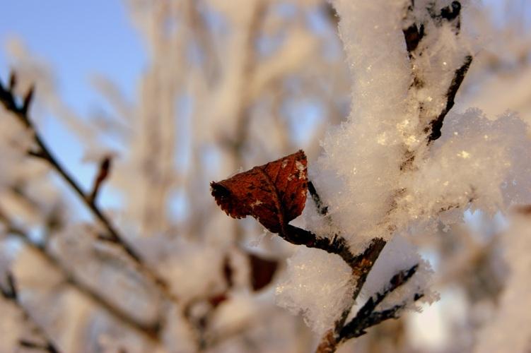 """фото """"last leaves"""" метки: ,"""