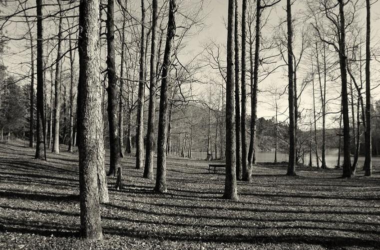"photo ""Геометрия солнца"" tags: landscape, forest"
