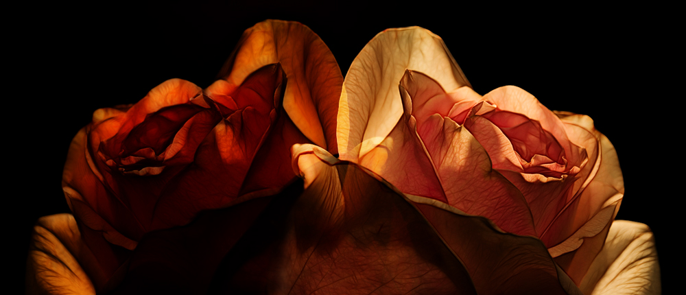 "photo ""Two parties of one rose"" tags: abstract, montage,"