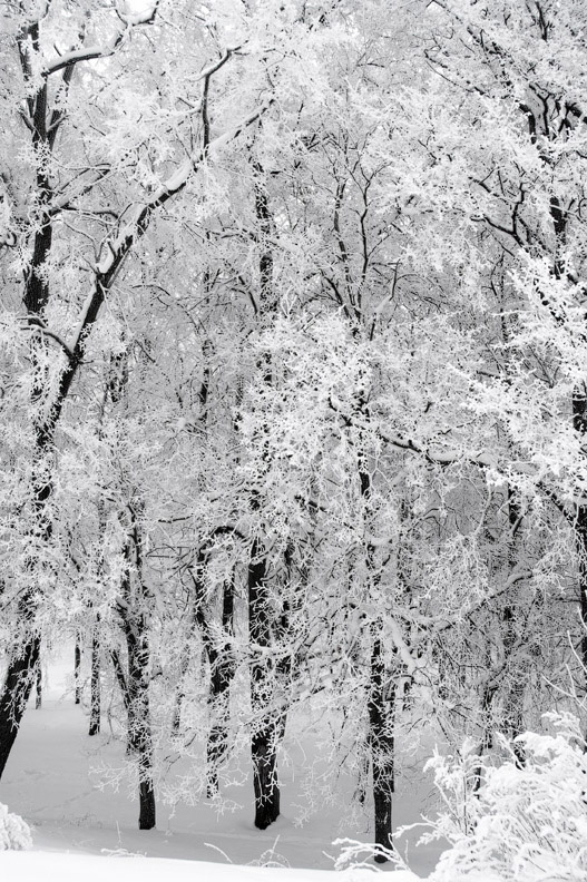 """photo """"Black and White"""" tags: landscape, winter"""