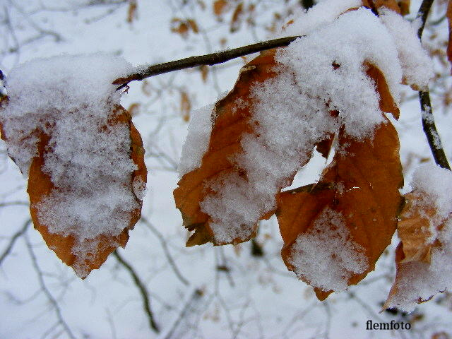 "photo ""Snow."" tags: landscape, winter"