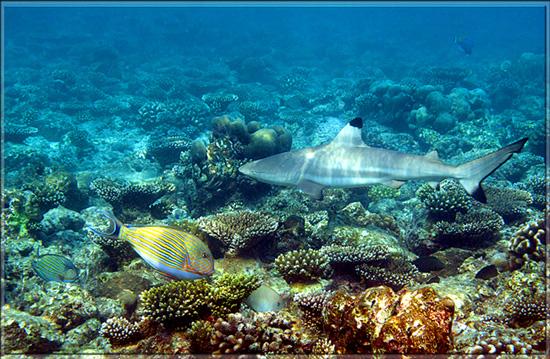 "photo ""подводный мир"" tags: underwater,"