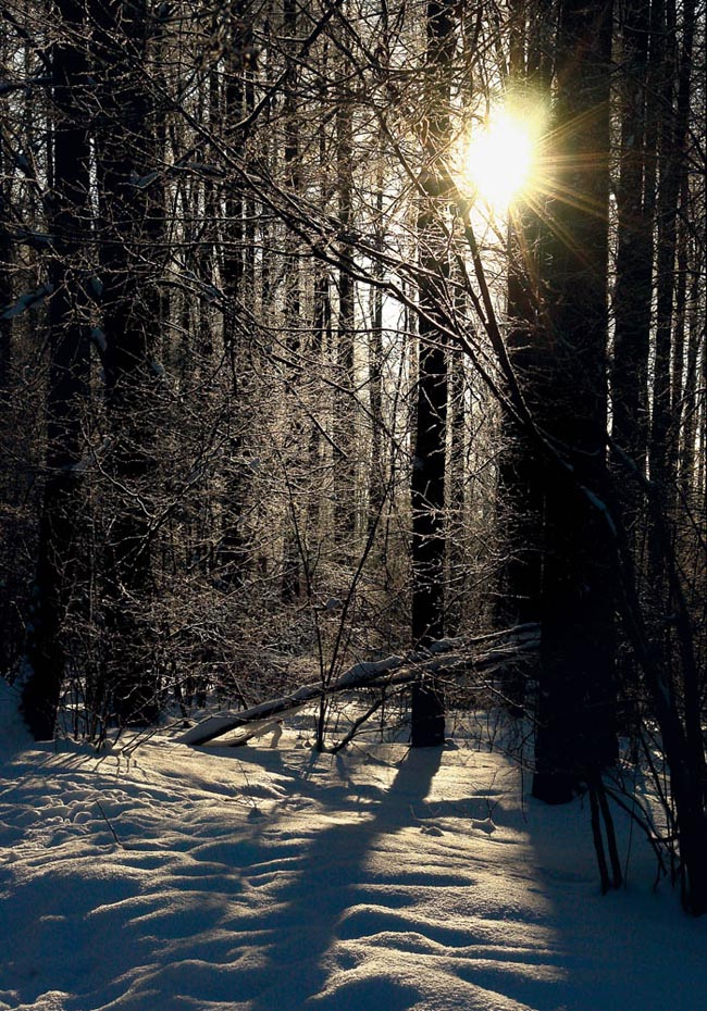 "photo ""***"" tags: landscape, forest, winter"
