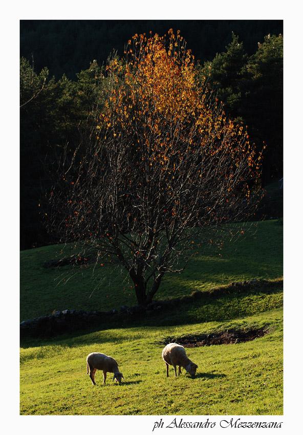"""photo """"pastorale"""" tags: landscape, mountains"""
