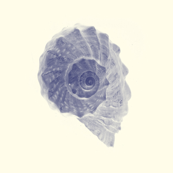 """photo """"seashell"""" tags: nature, macro and close-up,"""