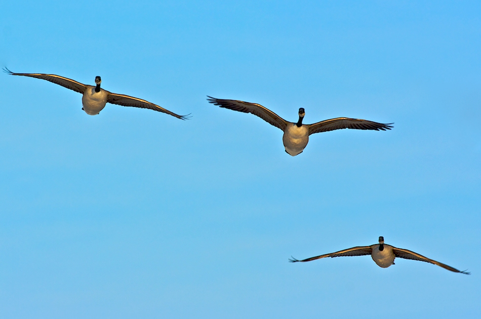 "photo ""We fly back..."" tags: nature, wild animals"