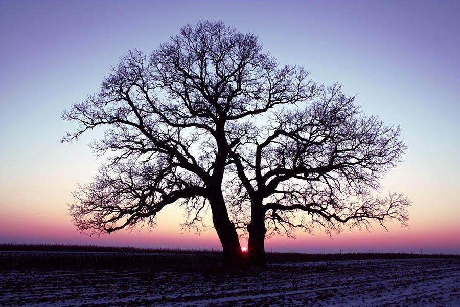"photo ""Janvier sunset / Заход в январе."" tags: landscape, spring, sunset"