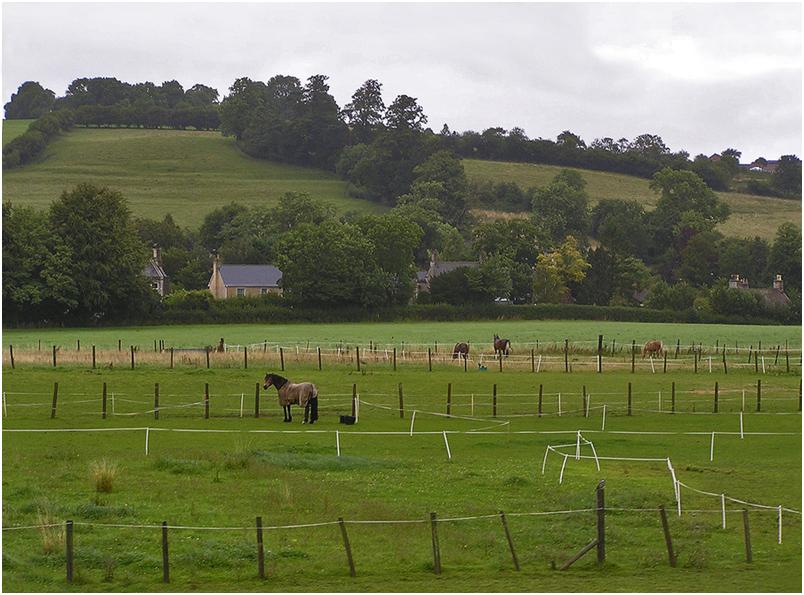 "photo ""Horse in a coat."" tags: landscape, nature, pets/farm animals, лошади"