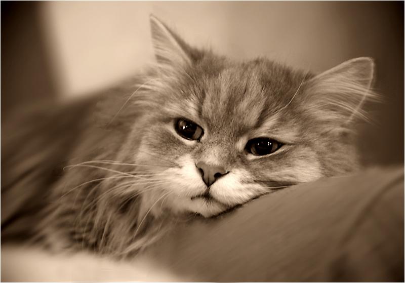 """photo """"Feel sad ..."""" tags: nature, pets/farm animals"""