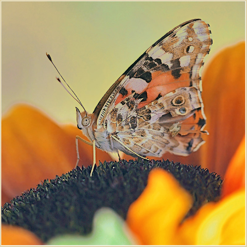 """фото """"Презентация Осени"""" метки: природа,"""