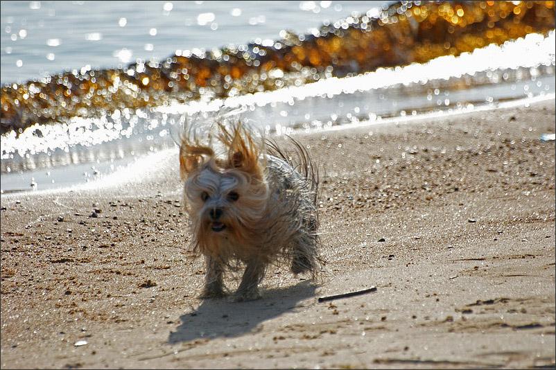 """photo """"Tsunamis ! ! !"""" tags: sport, humor,"""