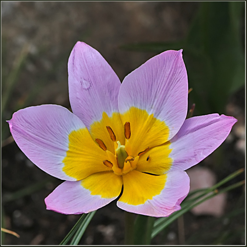 """фото """"Одиночество"""" метки: природа, цветы"""